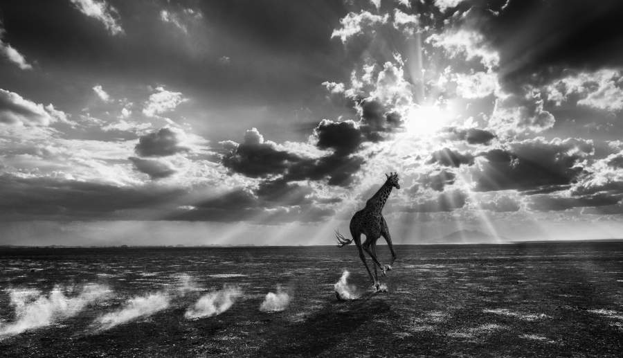 Una fotografia tratta dal volume di David Yarrow: «Heaven can't wait»