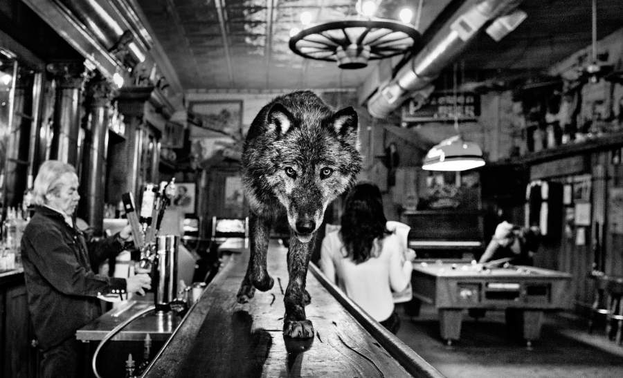 Una fotografia tratta dal volume di David Yarrow: «The Wolf of Main Street»