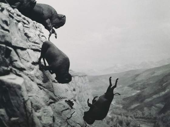 «Untitled (Falling Buffalo)» (1988-89) di David Wojnarowicz. Collection Museum of Contemporary Art Chicago, Gift of Stephen Solovy Art Foundation, 1992.93