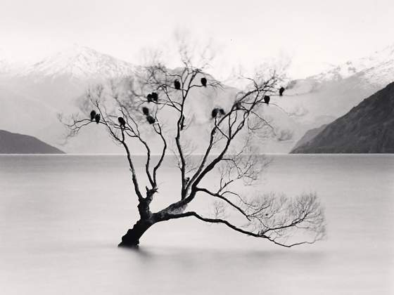 «Wanaka Lake Tree», di Michael McKenna